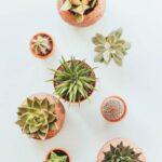 El riego para tus plantas y su importancia