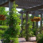 Cómo cuidar tu jardín este verano
