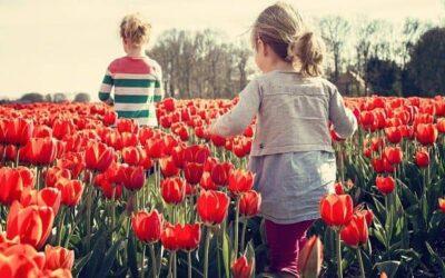 Novedades en Primavera